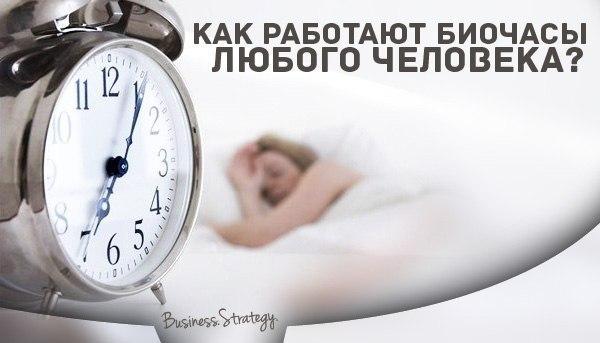 Биологические часы работы органов человека: зачем, значение.