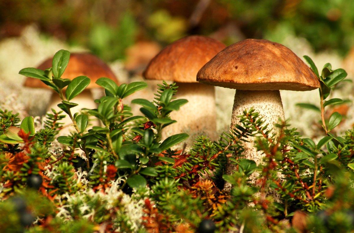 Пирог с грибами и сыром: как его приготовить самому?