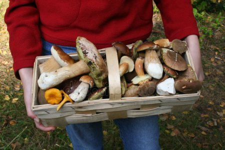 Как приготовить фаршированный перец с грибами?