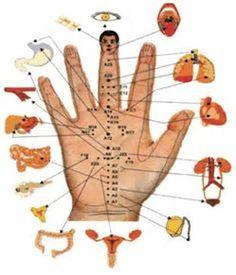 точки на теле человека для уменьшения аппетита