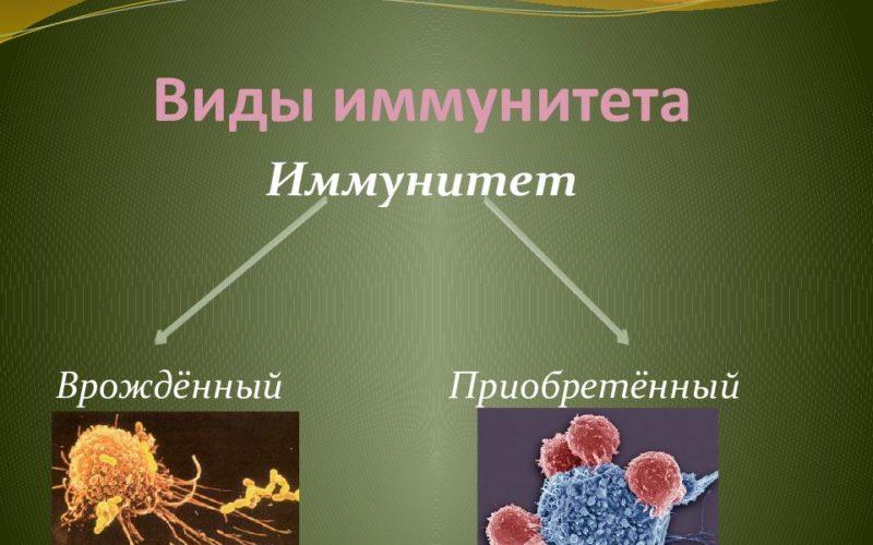 иммунитет врожденный приобретенный