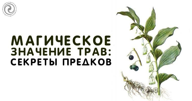 Магические свойства трав: названия, энергетика растений.