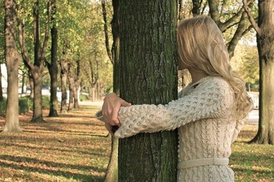 лечащие деревья