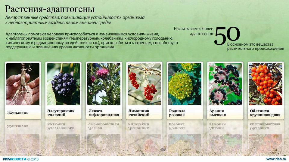 растительные адаптогены