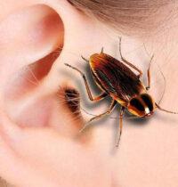 Если в ухо попало насекомое: правильные действия.