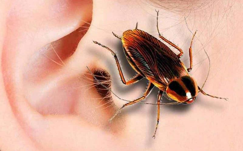 если в ухо попало насекомое